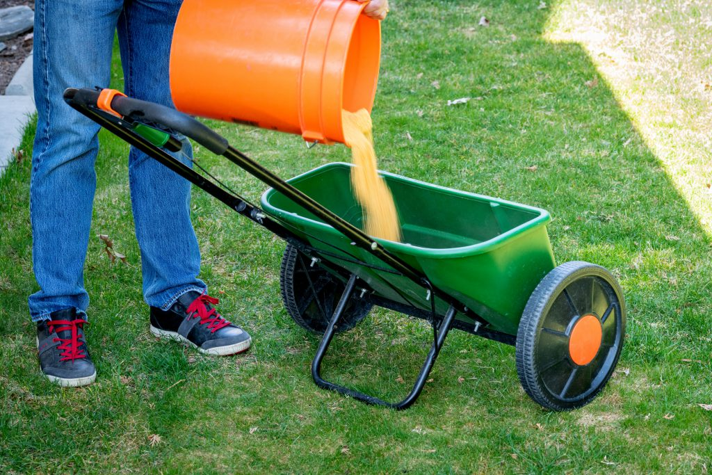 Fertilizer for a lawn is added to a spreader, man pouring from orange bucket into the spreader with a handle and wheels